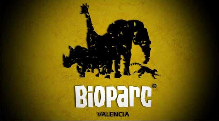 Programma estivo a Valencia per ragazzi 15